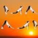 O Que Significa Saudação ao Sol no Yoga? Descubra Agora!